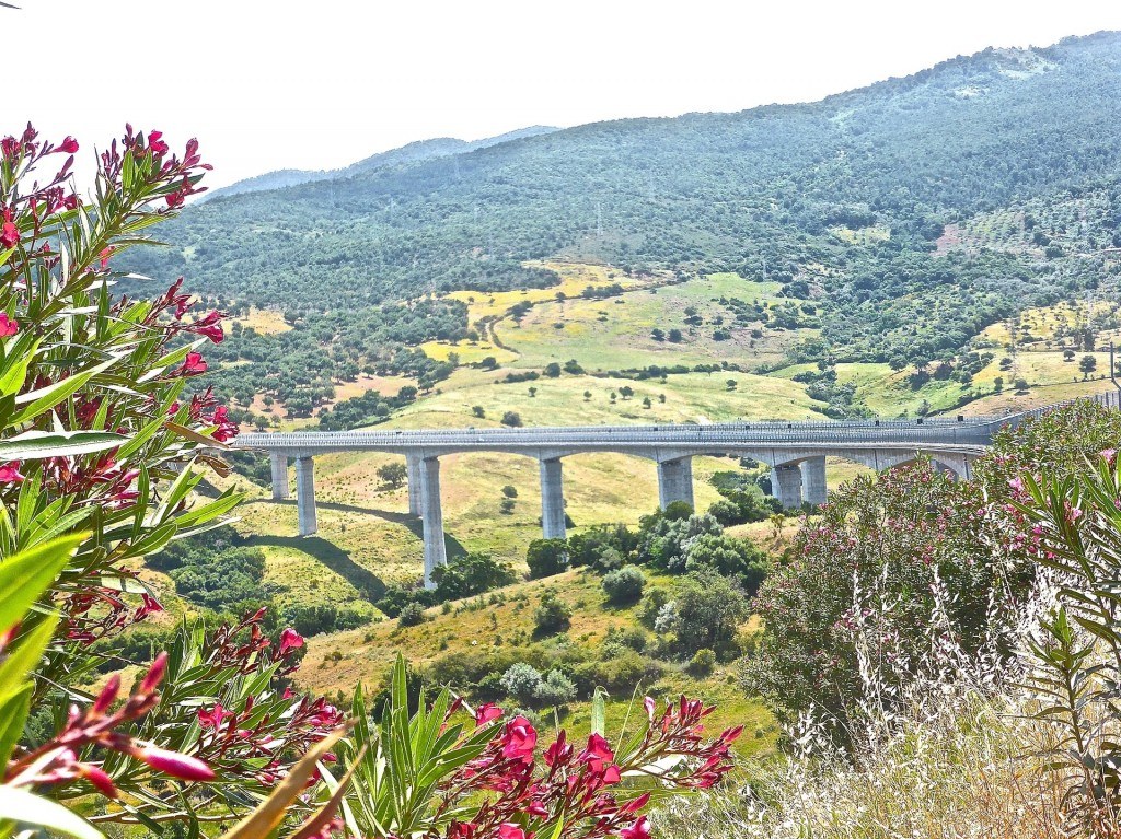 Haiti bridge the gap in social media
